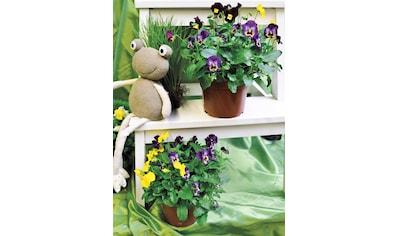 Winterhart Balkonpflanzen Bestellen Auf Rechnung Baur