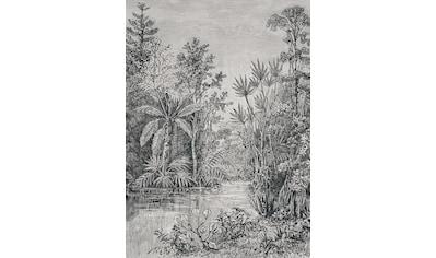 Fototapete »Jungle«, 200 cm Länge kaufen