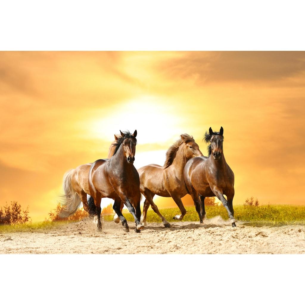 Papermoon Fototapete »Horses Run in Sunset«