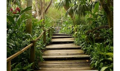 Papermoon Fototapete »Dschungelweg«, Vliestapete, hochwertiger Digitaldruck kaufen