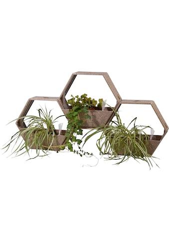 DOBAR Set: Pflanzkasten »Kaffee - Faser«, BxTxH: 50x21x44,5 cm, 3 Stück kaufen