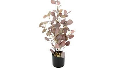 I.GE.A. Kunstpflanze »Eukalyptus«, Im Topf, mit Natursteinchen kaufen