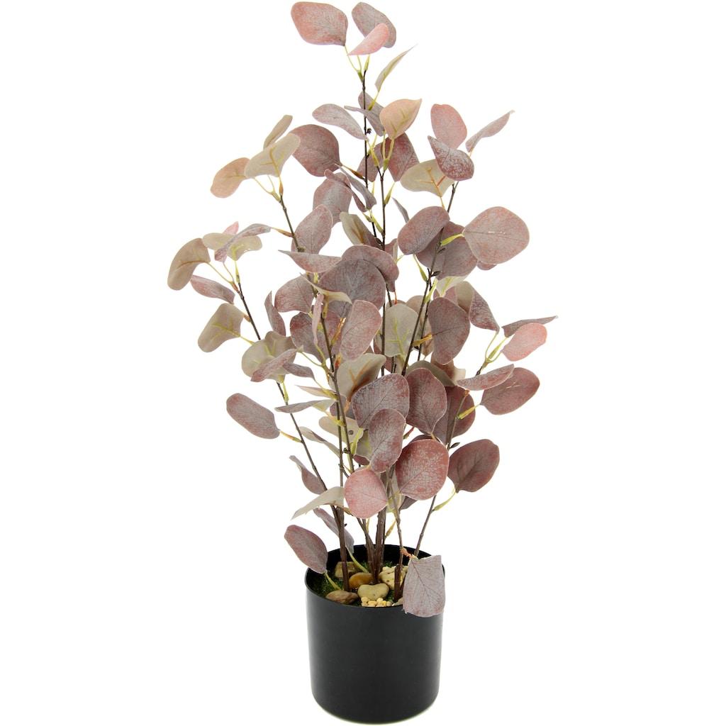 I.GE.A. Kunstpflanze »Eukalyptus«, Im Topf, mit Natursteinchen