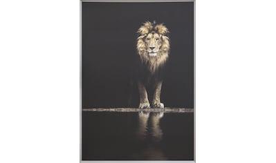 Spiegelprofi GmbH Bild mit Rahmen »Colorful lion«, (1 St.) kaufen