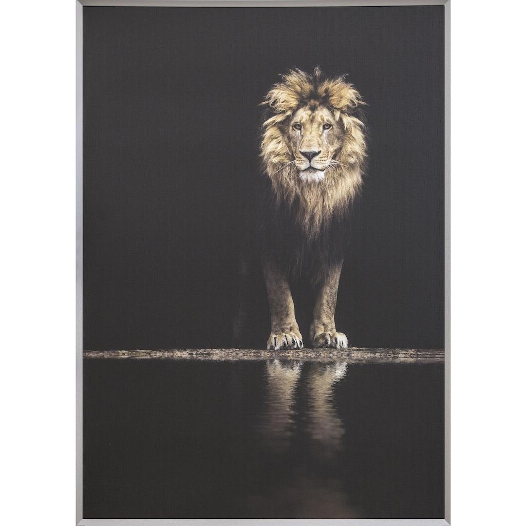 Spiegelprofi GmbH Bild mit Rahmen »Colorful lion«, (1 St.)