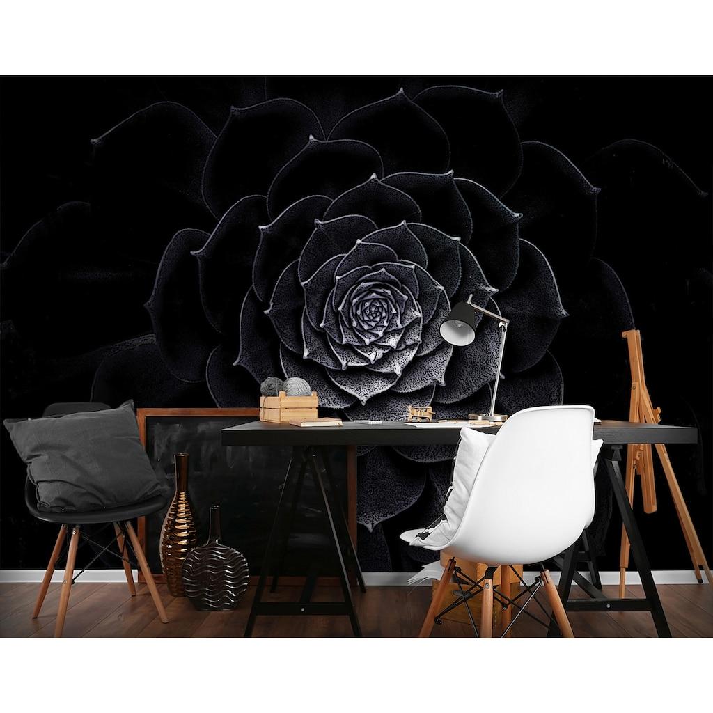 Consalnet Vliestapete »Schwarze Rose«, floral