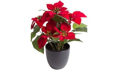 Botanic-Haus Kunstblume »Poinsettie mit 6 Blüten« kaufen