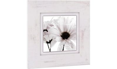 Home affaire Holzbild »Weiße Blüten« kaufen