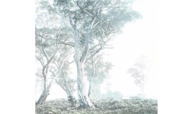 Komar Fototapete »Magic Trees«, minimalistisch-abstrakt kaufen