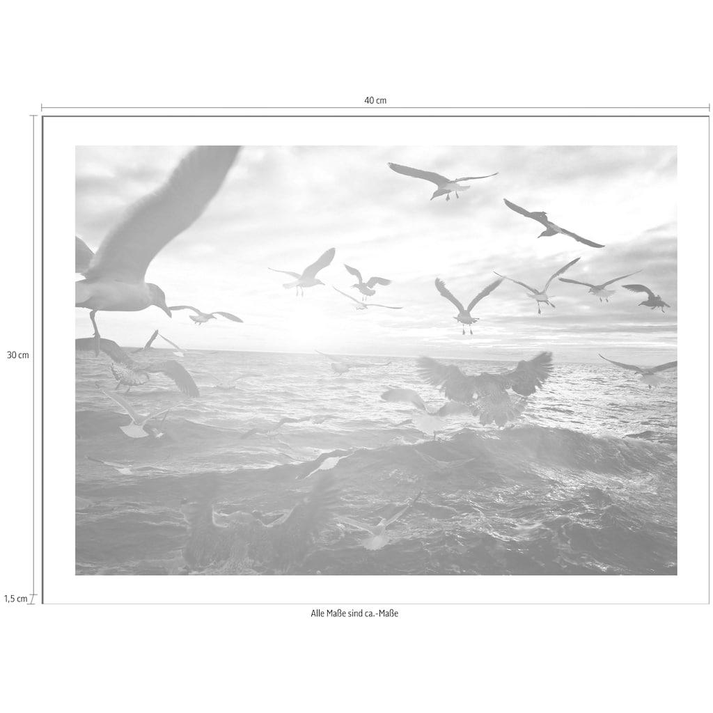 Spiegelprofi GmbH Bild »Vögel«, mit Rahmen
