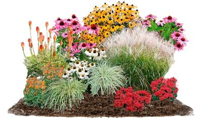 BCM Pflanzenset »Sommerliebe«, 24 Pflanzen kaufen
