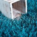 DELAVITA Hochflor-Teppich »Piezova«, rechteckig, 75 mm Höhe, Uni Shaggy, Wohnzimmer