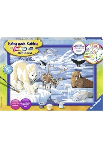 Ravensburger Malen nach Zahlen »Tiere der Arktis«, Made in Europe kaufen