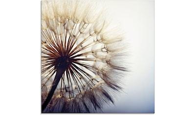 Artland Glasbild »Große Pusteblume« kaufen