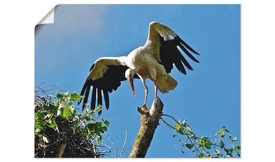 Artland Wandbild »Storch«, Vögel, (1 St.), in vielen Größen & Produktarten... kaufen