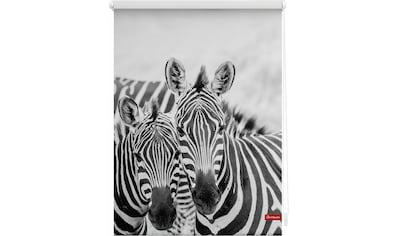 Seitenzugrollo »Klemmfix Motiv Zebra«, LICHTBLICK, Lichtschutz, ohne Bohren, freihängend kaufen