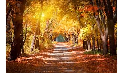 PAPERMOON Fototapete »Alley in the Autumn Park«, Vlies, in verschiedenen Größen kaufen