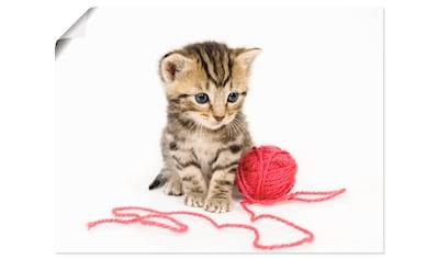 Artland Wandbild »Kätzchen mit rotem Garnball«, Haustiere, (1 St.), in vielen Größen &... kaufen