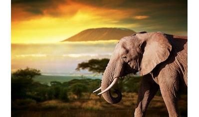 Papermoon Fototapete »Elefant von Kilimanjaro«, Vliestapete, hochwertiger Digitaldruck kaufen