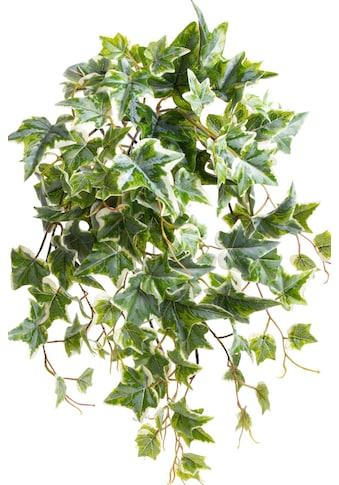 Botanic-Haus Künstliche Zimmerpflanze »Efeu-Hängebusch mit 10 Stielen« kaufen