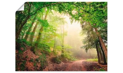 Artland Wandbild »Natürliche Torbögen durch Bäume«, Wald, (1 St.), in vielen Größen &... kaufen
