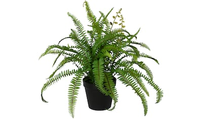 Creativ green Kunstpflanze »Nephrolepisfarn«, im Kunststofftopf kaufen