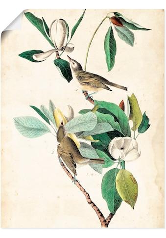 Artland Wandbild »Sängervireo«, Vögel, (1 St.), in vielen Größen & Produktarten -... kaufen