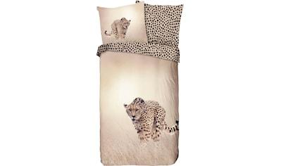 good morning Wendebettwäsche »Cheetah«, mit Gepard kaufen