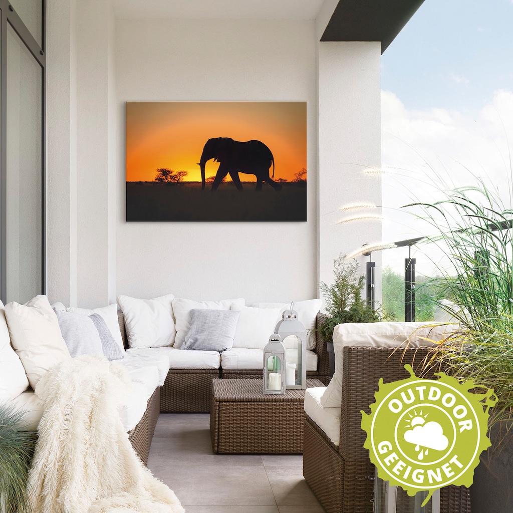 Artland Wandbild »Afrikanischer Elefant im Sonnenuntergang«, Wildtiere, (1 St.)