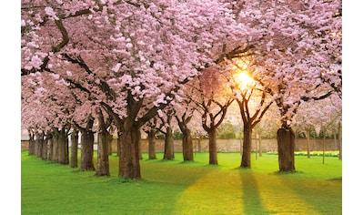 Papermoon Fototapete »Cherry Tree Garden« kaufen