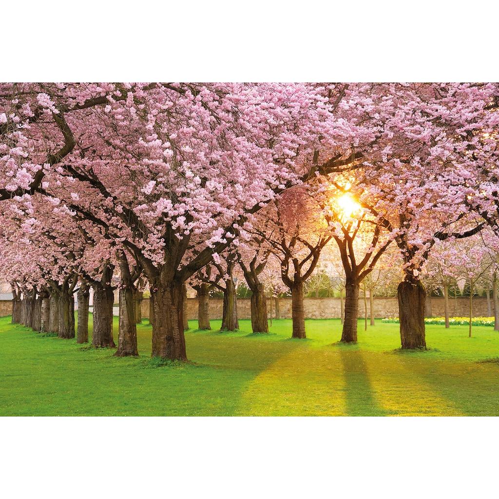 Papermoon Fototapete »Cherry Tree Garden«