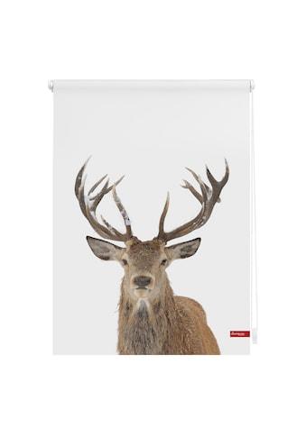 LICHTBLICK Seitenzugrollo »Klemmfix Motiv Hirsch«, Lichtschutz, ohne Bohren, freihängend, bedruckt kaufen