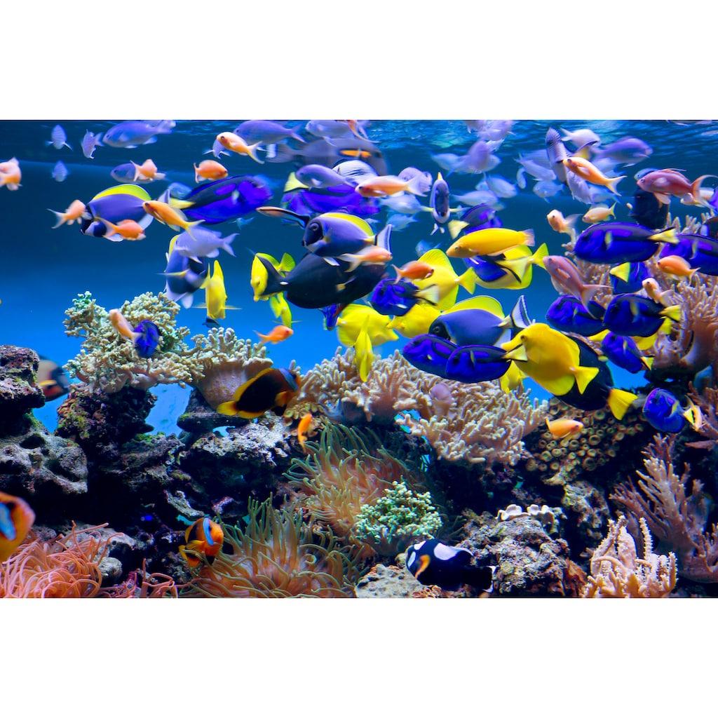 Papermoon Fototapete »Aquarium«