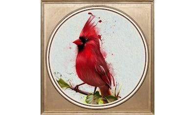 queence Acrylglasbild »Rotkehlchen« kaufen