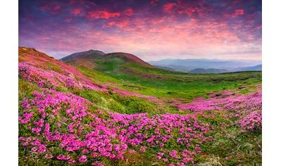 Papermoon Fototapete »Rhododendron Blumen«, Vliestapete, hochwertiger Digitaldruck kaufen