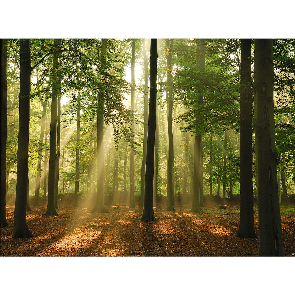 Fototapete »Forest in the Morning«