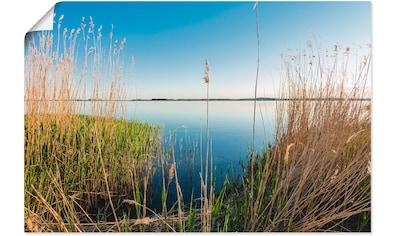Artland Wandbild »Achterwasser Insel Usedom«, Küste, (1 St.), in vielen Größen &... kaufen