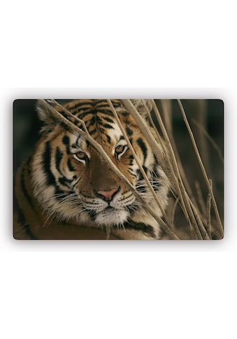 Home affaire Glasbild »Tiger« kaufen