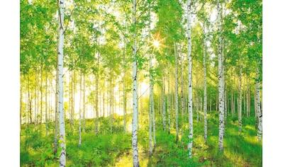Komar Fototapete »Sunday«, naturalistisch kaufen