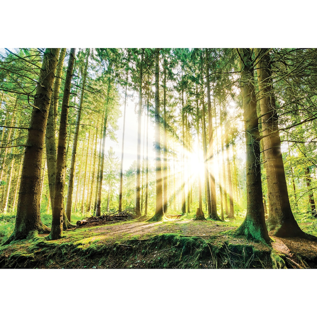 Consalnet Fototapete »Sonniger Wald«, Motiv