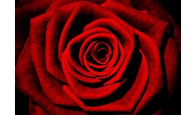 Consalnet Vliestapete »Rote Rose«, floral kaufen
