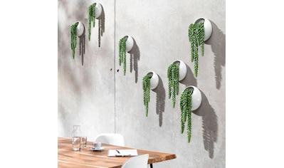 Schneider Kunstpflanze »Ranken«, Wanddeko kaufen