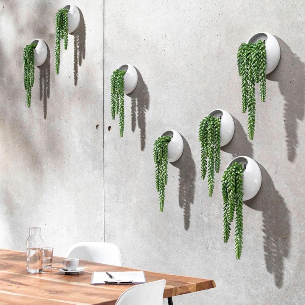 Schneider Kunstpflanze »Ranken«, Wanddeko