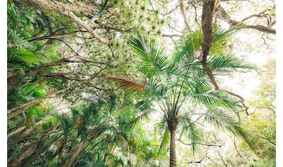 KOMAR Fototapete »Touch the Jungle«, Bahnbreite: 50 cm; Motiv bestehend aus mehreren Bahnen kaufen