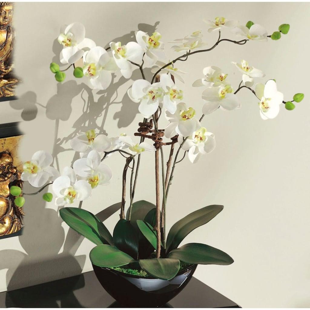 Schneider Kunstorchidee