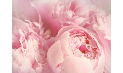 Papermoon Fototapete »Peony Flowers« kaufen