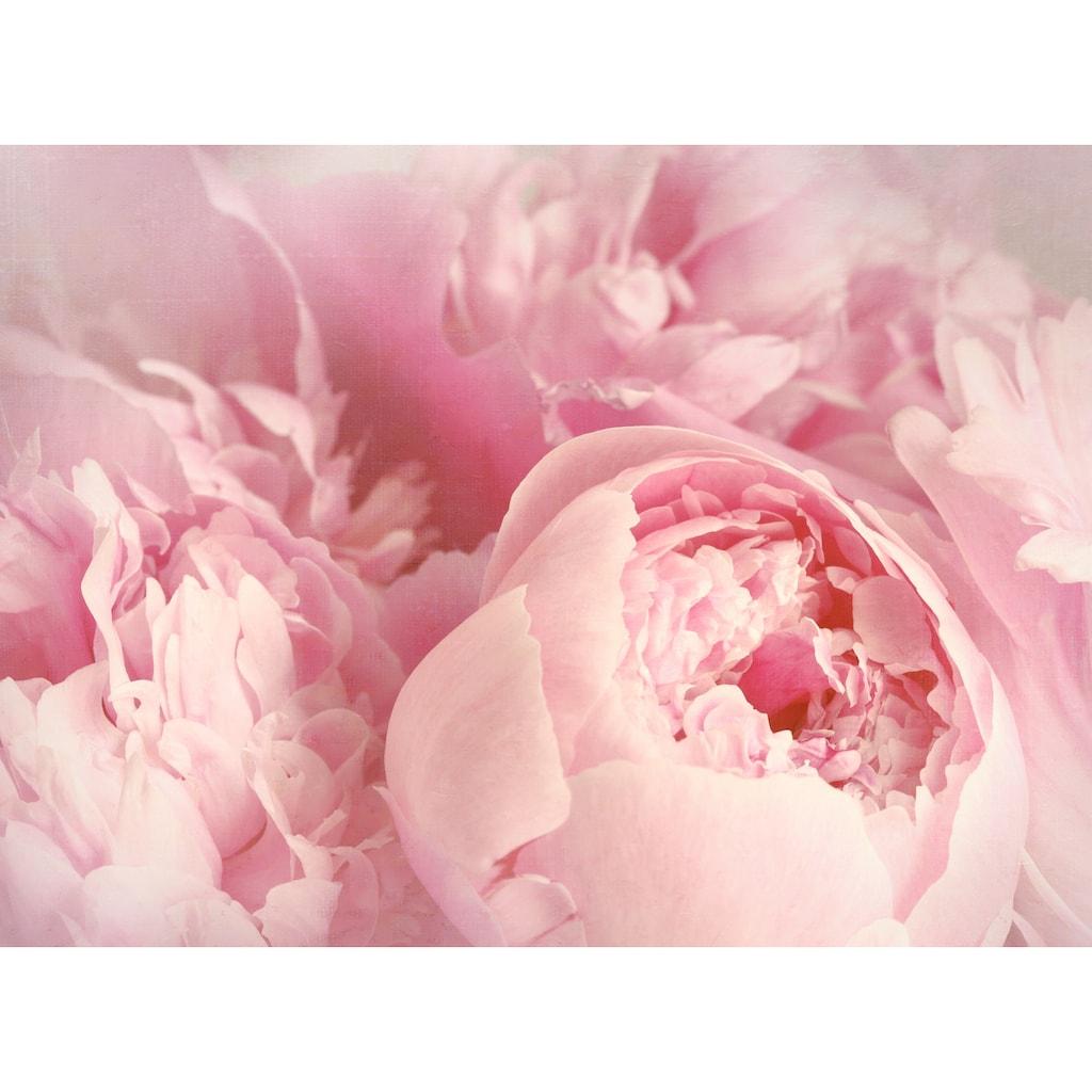 Papermoon Fototapete »Peony Flowers«