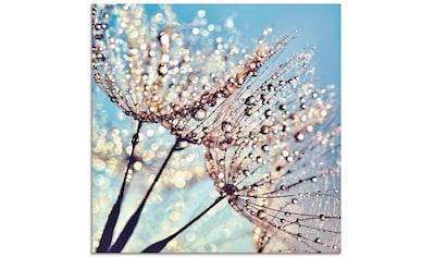 Artland Glasbild »Pusteblume Tröpfchenfänger«, Blumen, (1 St.) kaufen