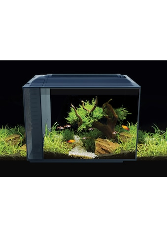 FLUVAL Aquarium kaufen