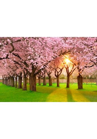 PAPERMOON Fototapete »Cherry Tree Garden«, BlueBack, 7 Bahnen, 350 x 260 cm kaufen